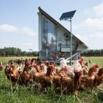 Wir lassen die Hühner raus