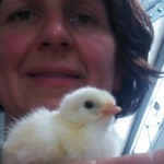 Bresse Gauloise Hühner & Hähne