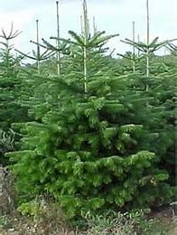 """Weihnachtsbäume """"Bioland"""""""